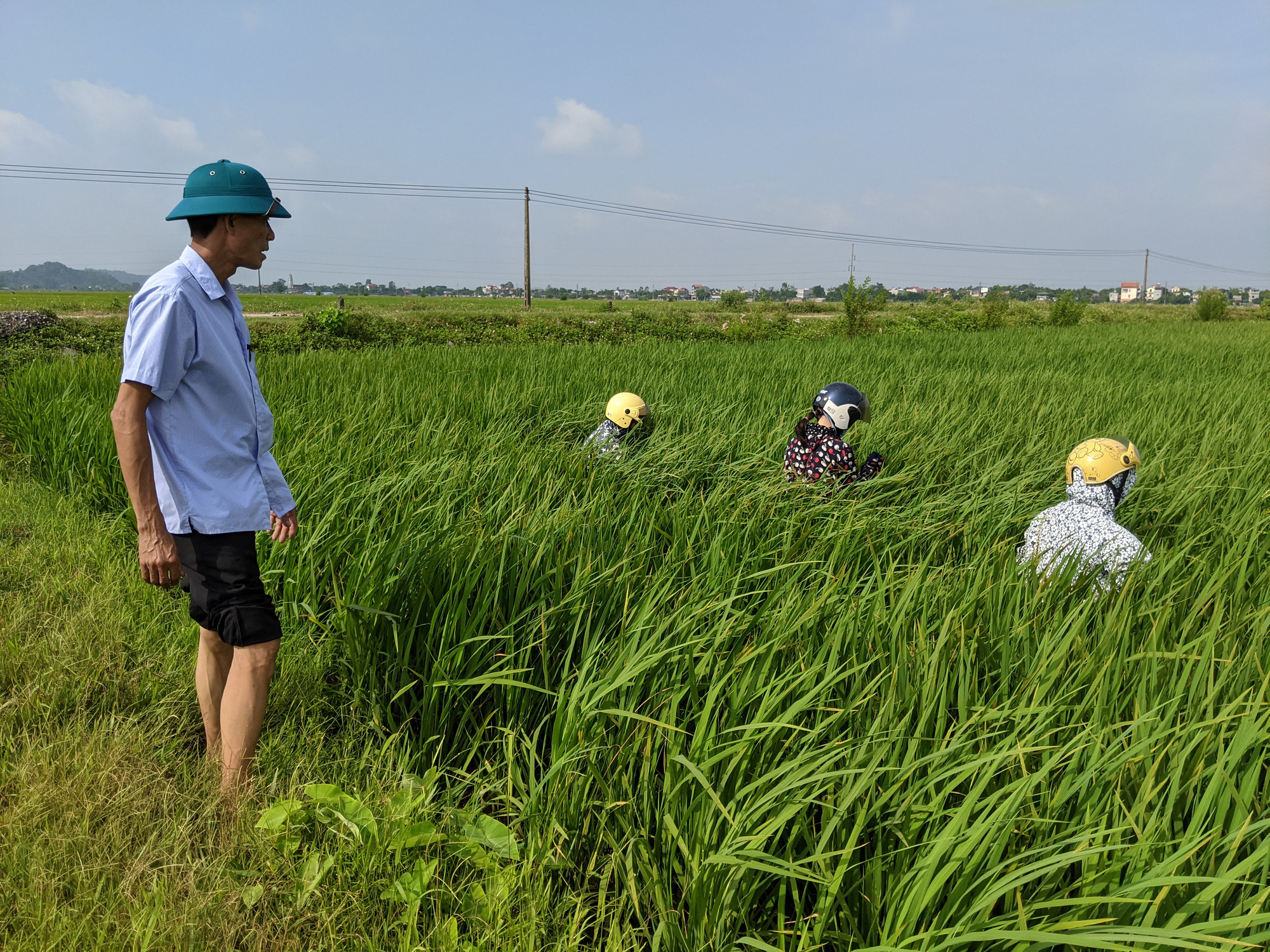Các tỉnh phía Bắc: Giữ lúa mùa an toàn trước sâu bệnh  - Ảnh 1.
