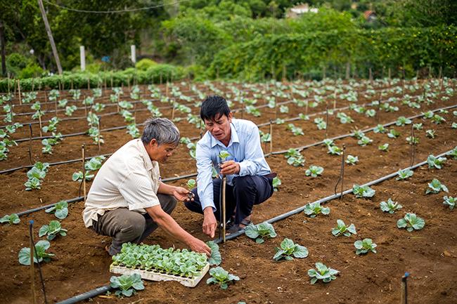 """Bình Định: Nông dân chân đất làm việc như """"chuyên gia"""", trồng rau, trồng cây ăn trái siêu thị sẵn sàng mua  - Ảnh 1."""