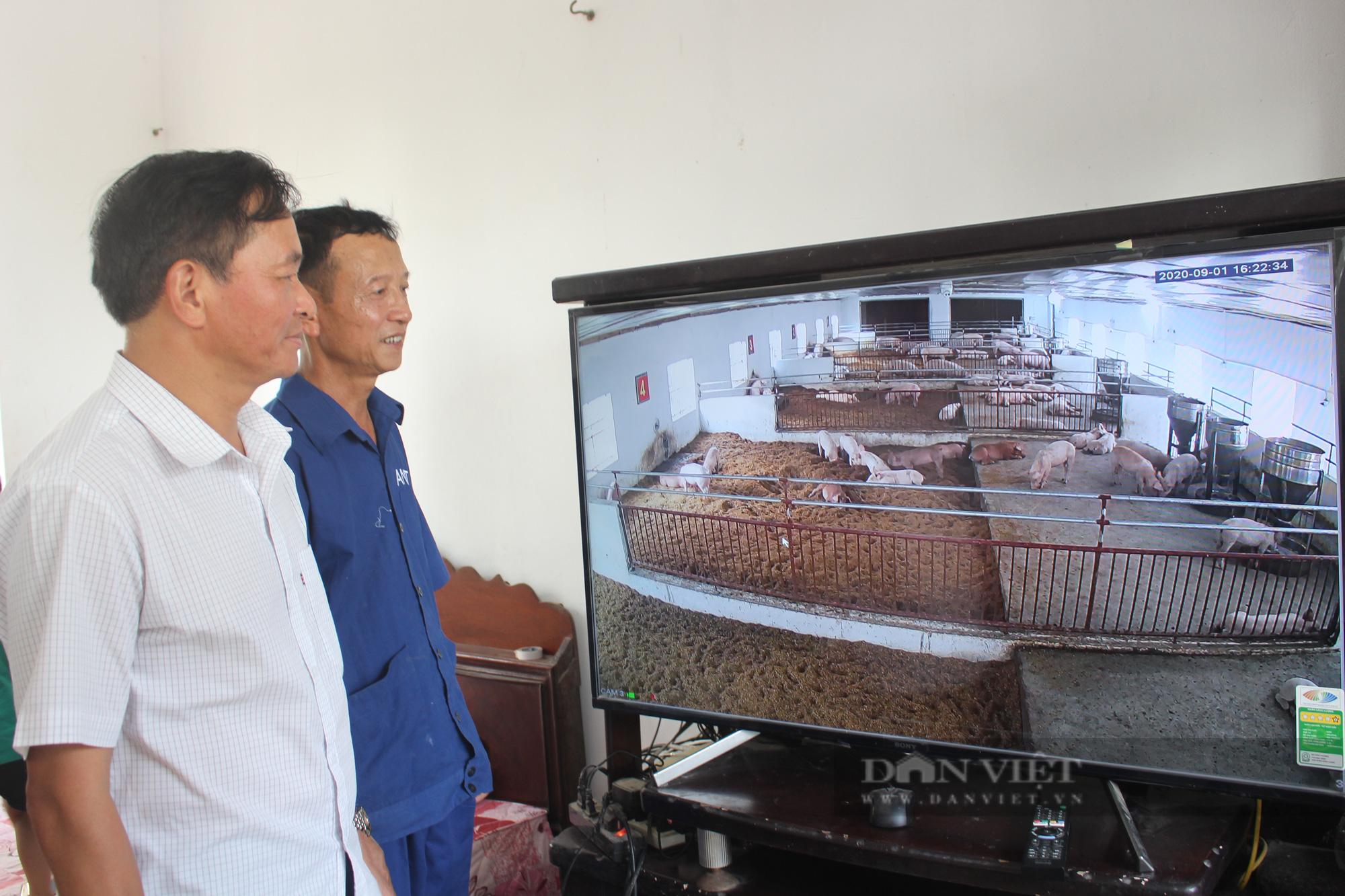 """Nam Định: """"Đổ"""" tiền tỷ vào nuôi lợn theo cách mới, ông nông dân này luôn né được dịch bệnh  - Ảnh 4."""