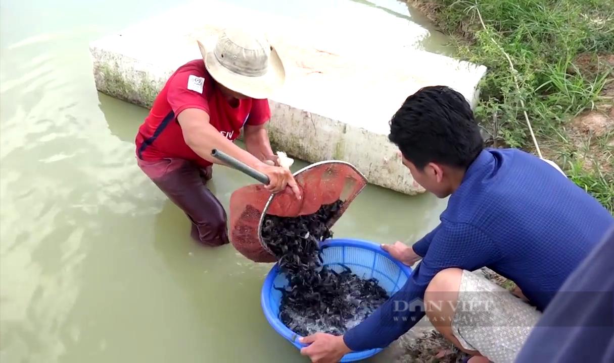 """Tiền Giang: Ương cá đặc sản đuôi đỏ như son, anh nông dân """"thủ phủ trái cây"""" thu tiền tỷ mỗi năm - Ảnh 5."""