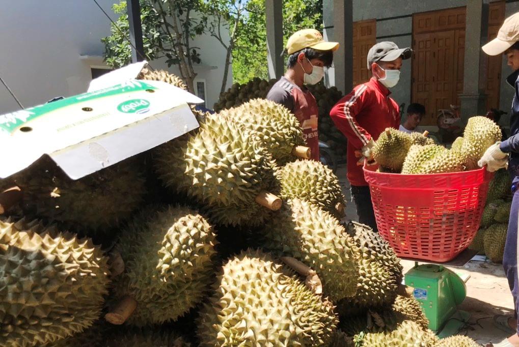 Dịch Covid-19 kéo dài, nông dân Khánh Hòa vẫn bán sạch đặc sản sầu riêng - Ảnh 2.