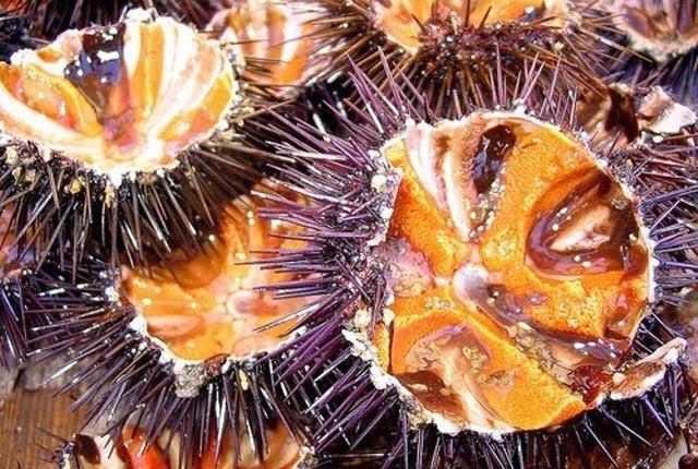 Bình Định nổi tiếng với món đặc sản gai góc, không phải có tiền là mua được - Ảnh 1.