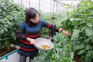 Vườn rau sân thượng đủ ăn cho gia đình hàng chục người