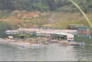 Về nơi cứ thả nuôi là có cá sạch, chơi chơi cũng thu 100 triệu/năm