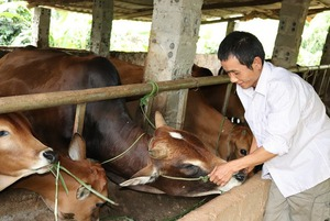 Hội Nông dân Sơn La: Tạo vốn giúp nông dân phát triển sản xuất