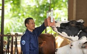 Cô Gái Hà Lan và hành trình kiến tạo giá trị cho ngành chăn nuôi bò sữa bền vững