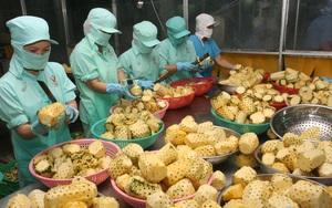 Con số đáng buồn: Hơn 80% sản phẩm rau quả Việt Nam xuất khẩu dưới dạng tươi, giá rẻ