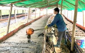 Kỹ thuật làm chuồng nuôi giun quế: Đơn giản và hiệu quả