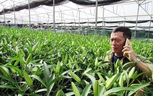 """Ông nông dân Lâm Đồng thu hàng chục tỷ đồng từ vườn ly """"công nghệ"""""""
