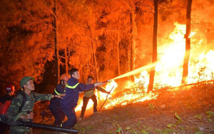 Cả nước xảy ra 179 vụ cháy rừng, thiệt hại giảm 68%