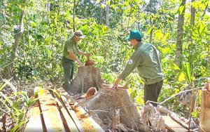 Phú Yên: Khởi tố 19 đối tượng mở đường tàn phá rừng giáp ranh