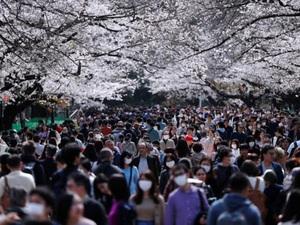 Người Nhật Bản đổ xô ngắm hoa anh đào giữa tâm bão dịch Covid-19