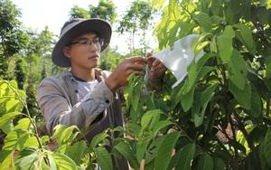 Nhờ cách làm lạ đời này, khu vườn ở Đắk Lắk sống khỏe giữa mùa khô hạn