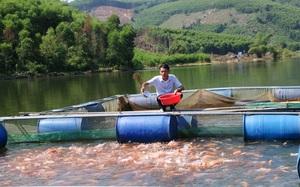 Quảng Ngãi: Nuôi dày đặc cá đặc sản, con nào cũng khỏe đẹp, bán đắt hàng nhờ...4 túi vôi