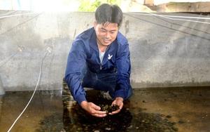 """Tuyên Quang: Chàng """"soái ca"""" nhà người ta bỏ về quê nuôi ốc nhồi mà lời 1,7 tỷ mỗi năm"""