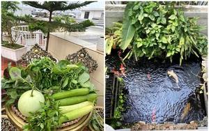 Đủ loại rau, củ và nuôi cá trên sân thượng biệt thự triệu đô của mẹ đảm Hải Phòng