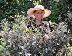 """Quảng Bình: Những đồi hoa sim tím của nông dân khiến """"dân phượt"""" phát sốt"""