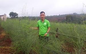"""Trai trẻ Gia Lai """"kéo cả làng"""" khá giả nhờ trồng rau """"lạ"""", chỉ hái mầm mà bán đắt tiền"""