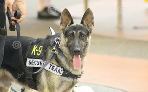 CIA sử dụng động vật để do thám và chống khủng bố như thế nào?
