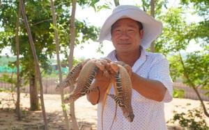 Bình Thuận: Một nông dân nuôi hơn 4.000 con dông cát trong vườn nhà
