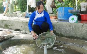 """Lào Cai: Nuôi loài cá được mệnh danh """"cá tiến vua"""", một nữ nông dân thu lãi hàng tỷ đồng"""