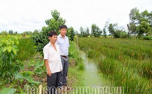 Lạ đời, một nông dân tỉnh Sóc Trăng bỏ lúa trồng thứ cỏ dại này mà thương lái tranh nhau mua