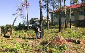 """Khánh Hoà: Đáng ngại, sốt đất làm vườn bởi cứ trồng cây ăn quả là """"nghe đồn"""" thu bạc tỷ"""
