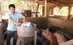 """Nông dân Sơn La """"phát tài"""" nhờ nuôi lợn"""