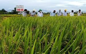 """Quảng Nam: 3 giống lúa của Vinaseed đẻ khỏe, tốt bời bời, nông dân """"mê tít"""""""