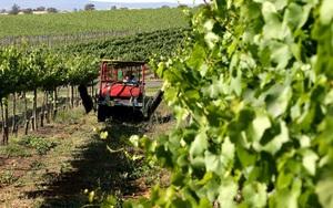 Chưa đầy 1 tháng, Trung Quốc mở 2 cuộc điều tra rượu vang Úc