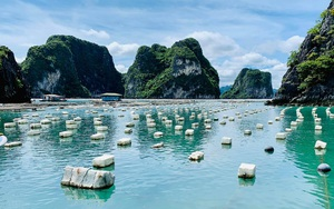 Quảng Ninh: Nơi đầu tiên cả nước ban hành quy định về phao nổi trong nuôi trồng thủy sản