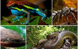 """5 loài """"quái vật"""" được mệnh danh là """"sát thủ máu lạnh"""" của vùng Amazon"""