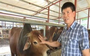 Nuôi trâu bò gầy thành béo, nông dân Sơn La thu nửa tỷ mỗi năm