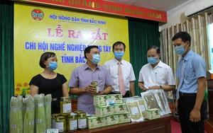 """Bắc Ninh: Nông dân trồng măng tây xanh lập chi hội nghề nghiệp, quyết chơi lớn với loại """"rau hoàng đế"""""""