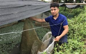 Đáng báo động: Kẻ trộm bắt sạch gần 700.000 con ốc nhồi giống của 1 nông dân tỉnh Thanh Hóa