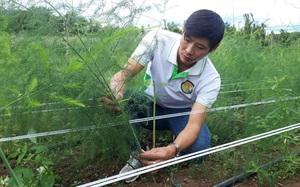 Cất bằng huấn luyện viên thể dục, 9X tỉnh Đắk Lắk về quê làm giám đốc trồng vô vàn rau lạ