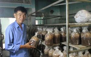 Đà Nẵng: Tiền vốn Quỹ Hỗ trợ nông dân đang giúp nhiều nông dân có việc làm thường xuyên, tăng thu nhập