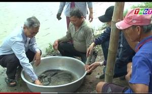 """Một nông dân tỉnh Đồng Tháp """"sáng chế"""" cách nuôi con đặc sản độc đáo: Cho cá heo ở với cá chạch lấu"""