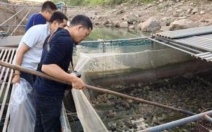 """Phú Thọ: """"Gà đồng"""" là con gì mà dân ở đây ra sông Đà nuôi la liệt, vớt lên bờ bán 55.000 đồng/kg?"""