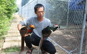 Khánh Hòa: Lạ, ông nông dân cầm 10 tỷ và bằng Đại học thủy sản lên núi nuôi la liệt những loài gà lạ hoắc