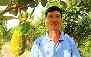 An Giang: Trồng hàng ngàn cây mít Thái trên bờ kênh, ai ngờ cây thấp tè đã ra nhiều trái