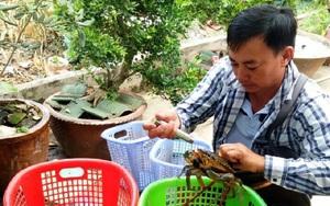 Cà Mau: Giá cua biển tăng cao chưa từng thấy, có loại 1 triệu/ký, nhà nào bắt cua bán thì trúng đậm dịp đầu năm