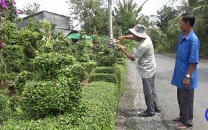 Một ông nông dân tỉnh Tiền Giang bỏ ra 30 năm trồng hàng rào nông thôn mới đẹp mê li, ai cũng phục lăn