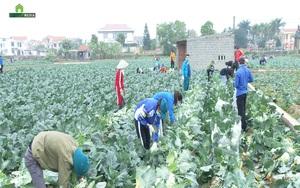 Hải Dương: Thu hoạch hàng tấn rau màu trao tặng chốt kiểm dịch và người dân vùng tâm dịch