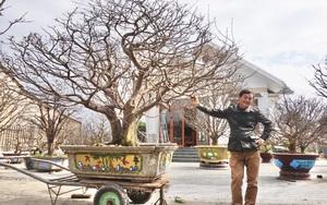"""Đệ nhất danh mai đất Quảng Nam- người sở hữu những """"quái cây"""" mai vàng độc nhất, không giống ai"""