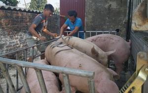 Giá heo hơi tăng, Bộ Công Thương muốn tạo điều kiện thuận lợi cho nhập khẩu thịt lợn