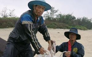 TT-Huế: Loài cá trước rẻ như cho nay thành đặc sản, có ngày trúng luồng cá dân kiếm được 30-50 triệu đồng