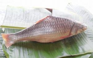Vĩnh Long: Loài cá quý hiếm đẹp như tiên, nhưng sao cái tên nghe lại bị giật mình thon thót