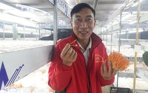 Trồng nấm đông trùng hạ thảo thuận tự nhiên, một ông nông dân tỉnh Lai Châu kiếm bộn tiền