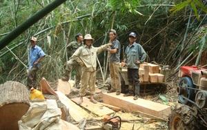 """Đắk Lắk: Thêm một vụ phá rừng quy mô lớn xảy ra ở """"điểm nóng"""" Krông Bông"""
